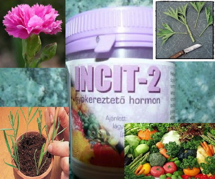PRODAJEM HORMON ZA OŽILJAVANJE REZNICA Hormon-za-oziljavanje-reznica-Incit-2-_slika_O_1098443