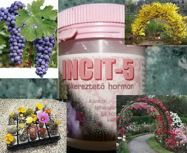 PRODAJEM HORMON ZA OŽILJAVANJE REZNICA Hormon-za-oziljavanje-reznica-Incit-5-_slika_O_1098480
