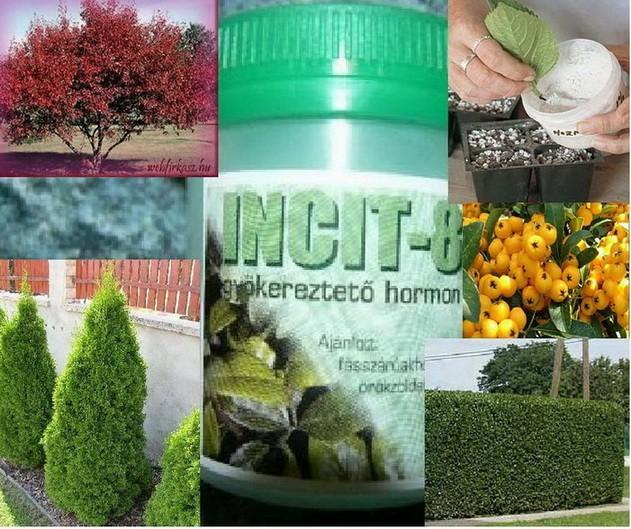 PRODAJEM HORMON ZA OŽILJAVANJE REZNICA Hormon-za-oziljavanje-reznica-Incit-8-_slika_O_1098457